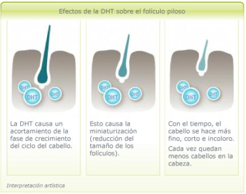 efectos-dht